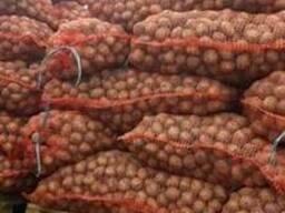 Семенной картофель гала