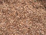 Álnus glutinósa , Семена ольхи, ольха семена, ольха черная семена, семена ольхи клейкой - photo 3