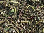 Лекарственные Травы и плоды - фото 3
