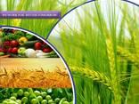Производитель и поставщик пестицидов по всему миру - фото 1